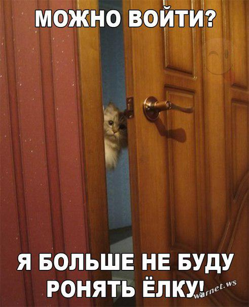 kot_ny_1