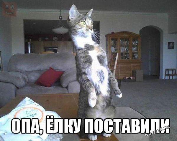kot_ny_2