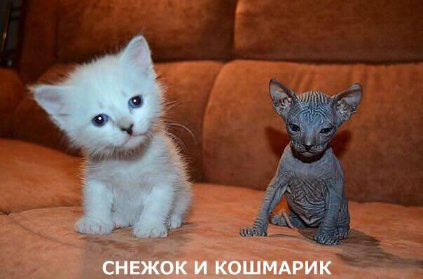 snezok_i_kosmarik