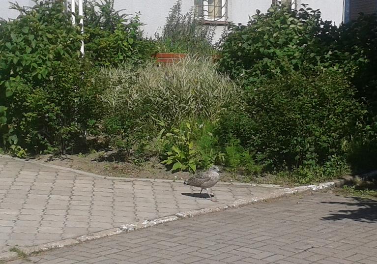 ptec2