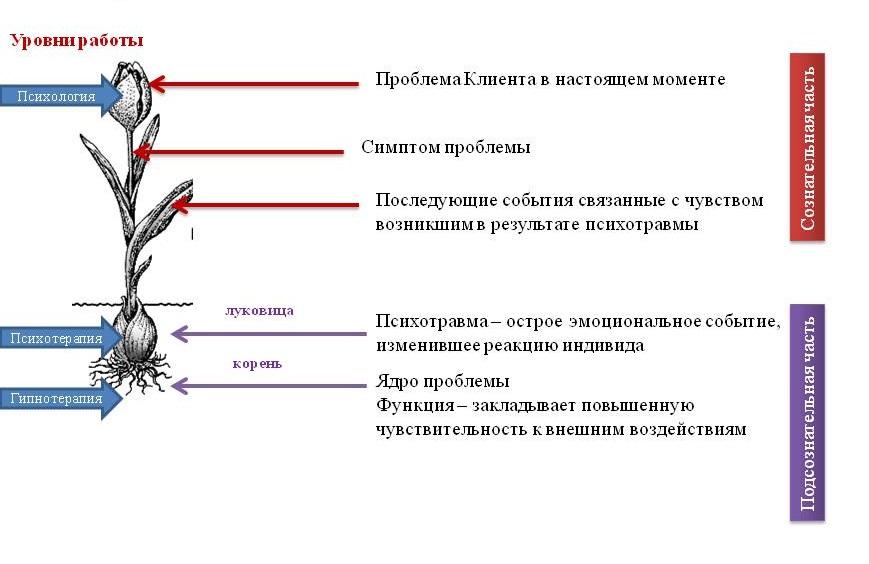 Комплексная терапия В. Макулов 5