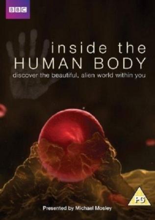 Внутри человеческого тела.jpg