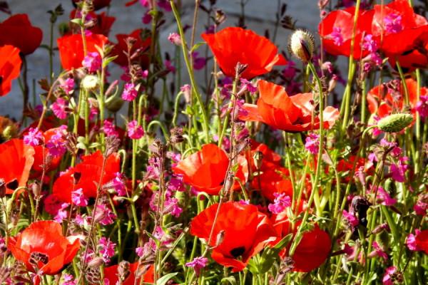 Весеннее разноцветие в Иерусалимском ботаническом саду