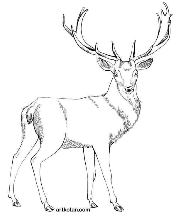 картинки для срисовки оленей