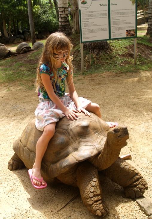 катание на черепахах