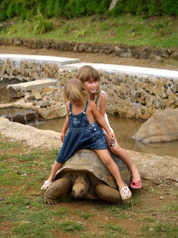 на черепахе