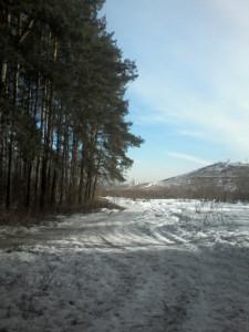 лес 027