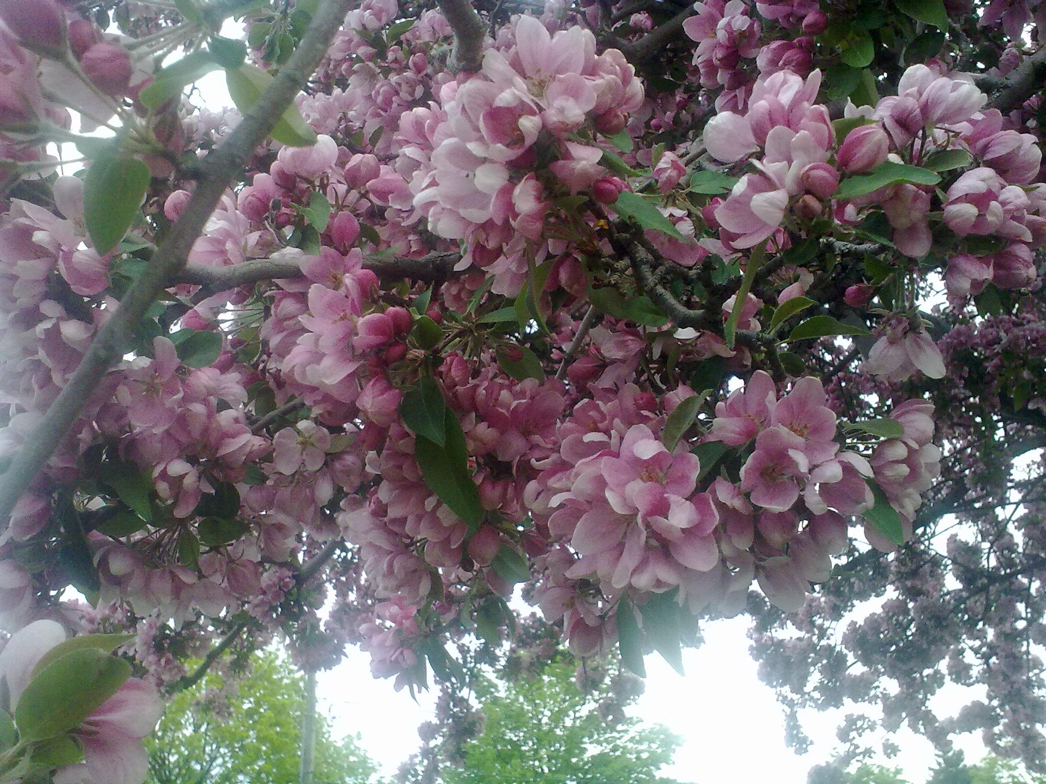 цветущий май фокстрот слушать