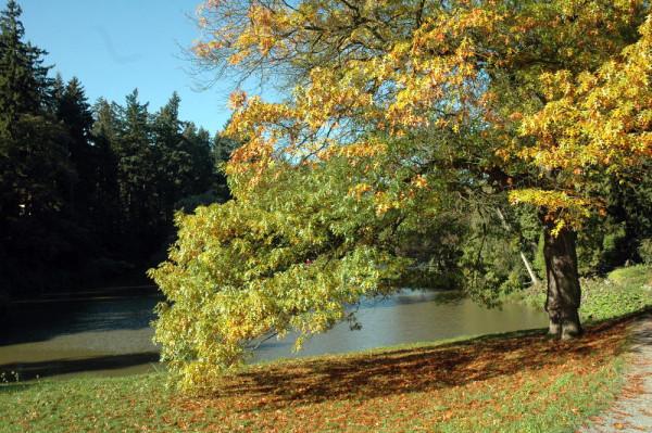 МамаДома осень