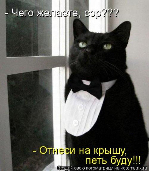 1397231448_novye-kotomatricy-13