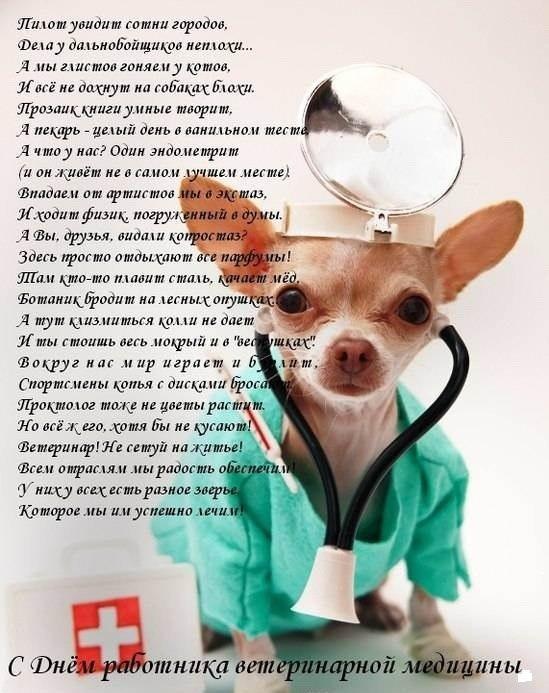 Картинки с днем ветеринара поздравление с днем ветеринара
