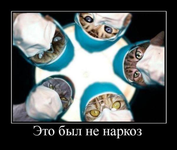 1315829020_demotivatory_12