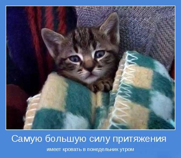 1379840198_www_radionetplus_ru-11