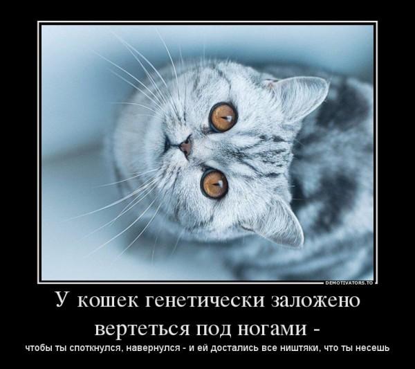 21966349_u-koshek-geneticheski-zapisano-vertetsya-pod-nogami-