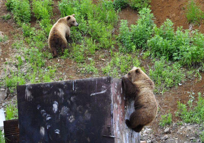 медведь на баке