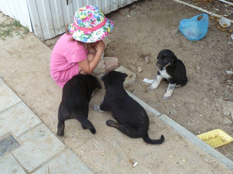 Маша с щенками