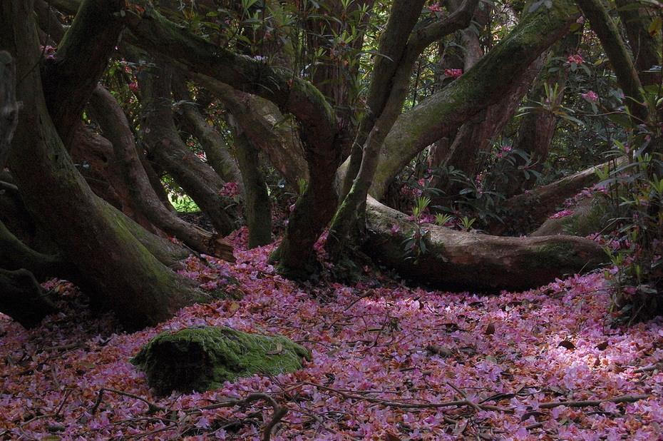 затерянные сады хелигана на английском