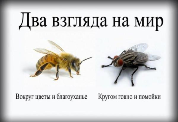 2-vzglyada-na-mir