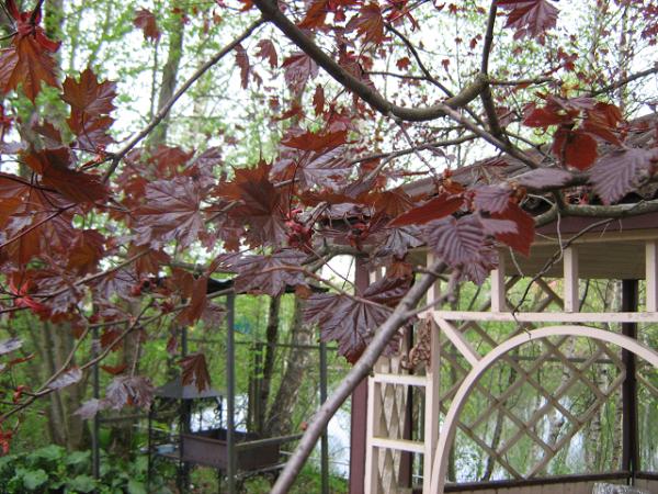 «Красный уголок нашего сада»