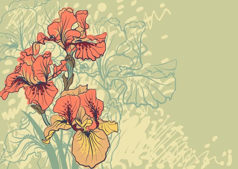 iris flower15