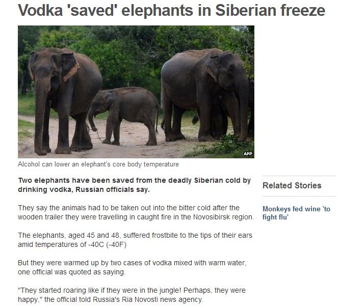 vodka-elephants
