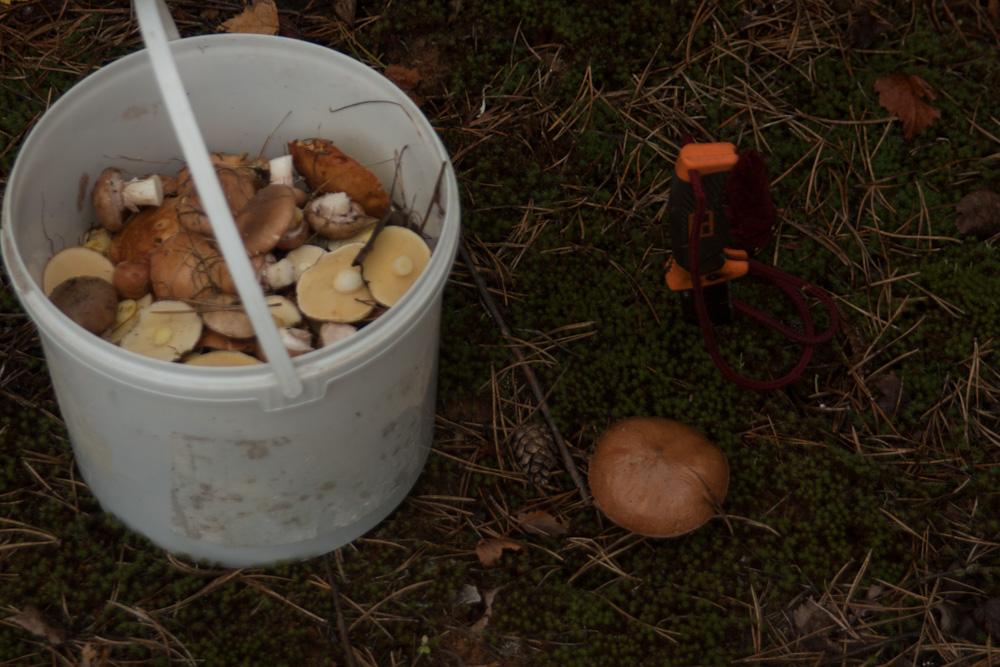 белые грибы при диете