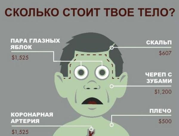 одеться так: сколько стоит мозг человека Polyprpilene