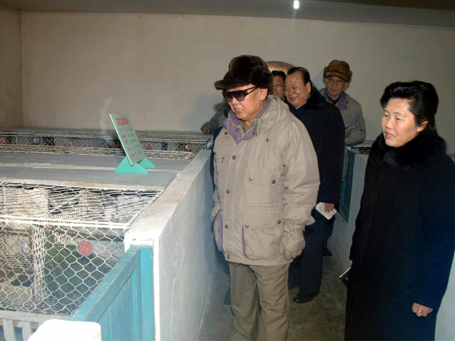 6. Великий Руководитель товарищ Ким Чен Ир руководит на месте Чанганской кроличьей племенной фермой, январь 2008 года
