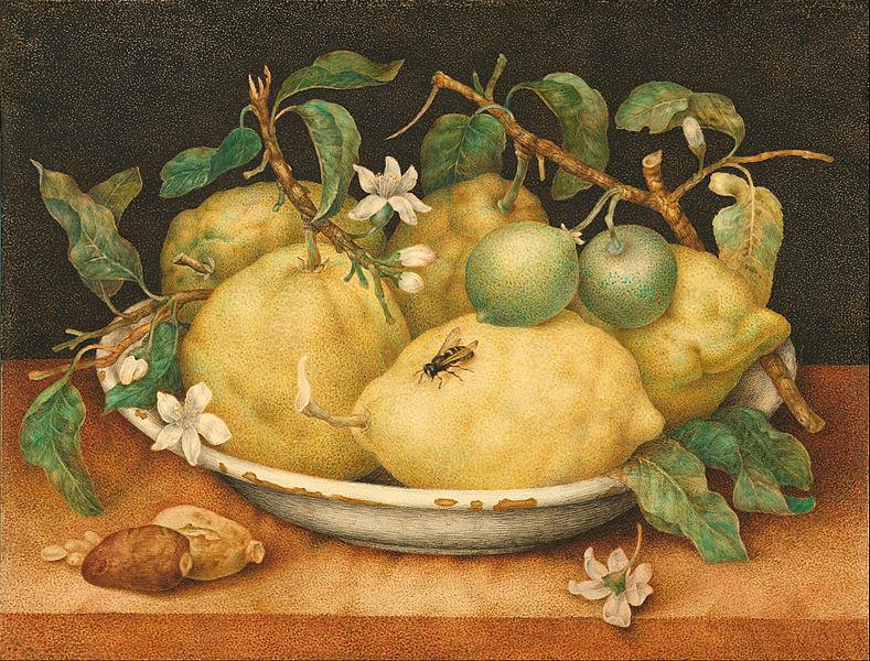 Оса и лимоны на картине итальянской художницы Джованны Гарцони (1600—1670)