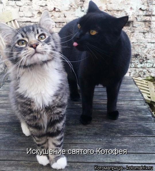 kotomatritsa_RTe