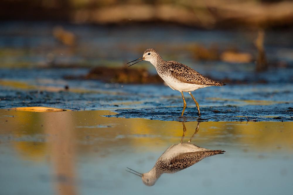 памятник болотная птица кулик картинка имя подвижника