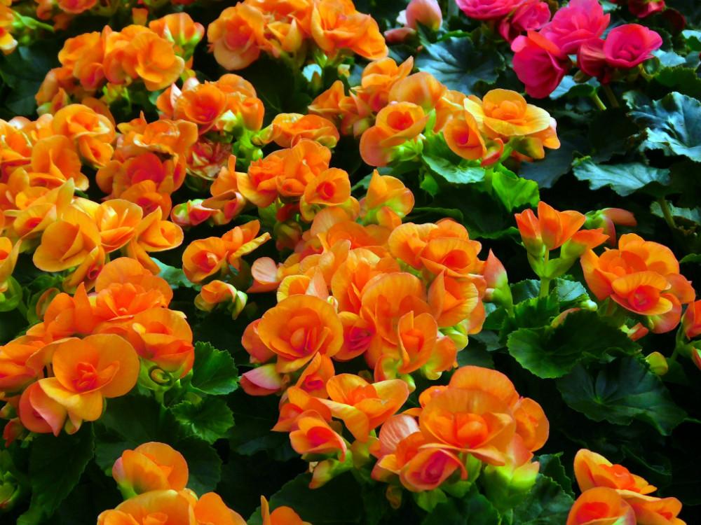 DSCN9449blog.jpg