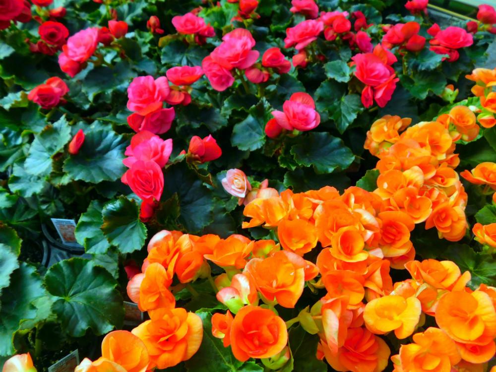 DSCN9467blog.jpg