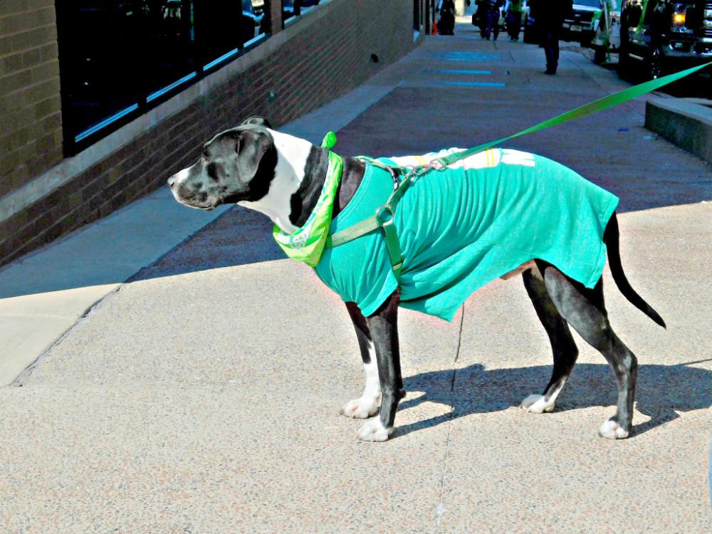 imageblog-dog-1.jpg