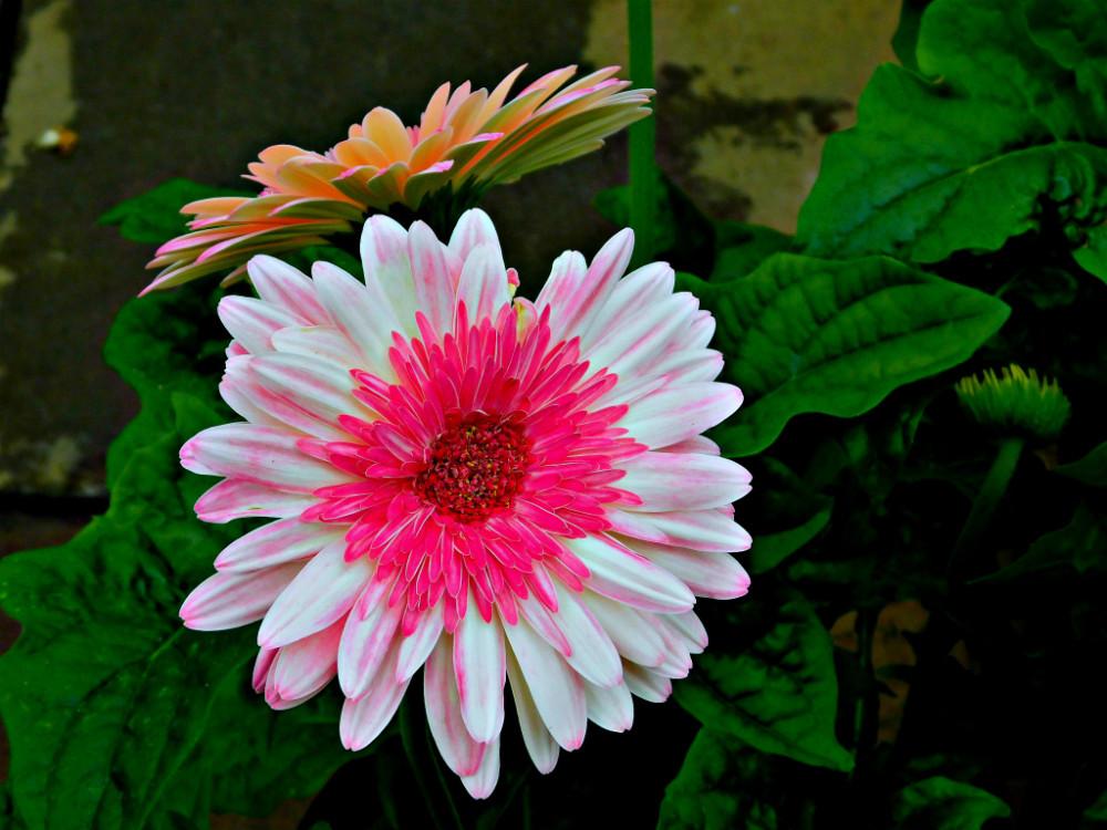 DSCN9837blog.jpg