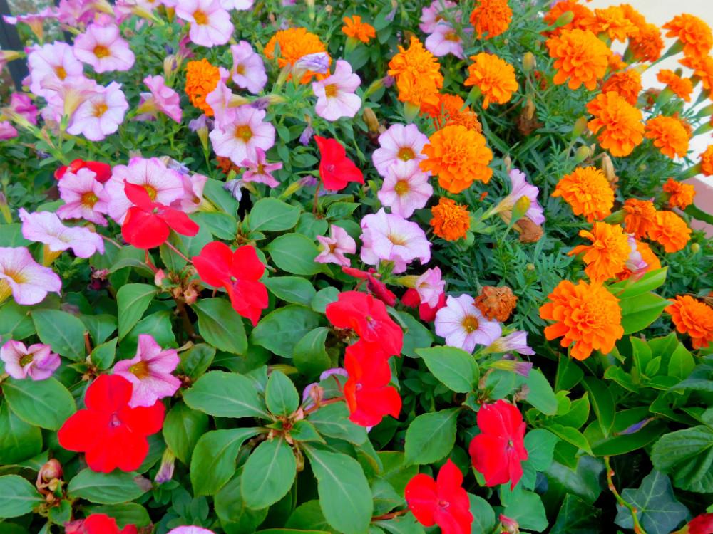 DSCN0804blog.jpg