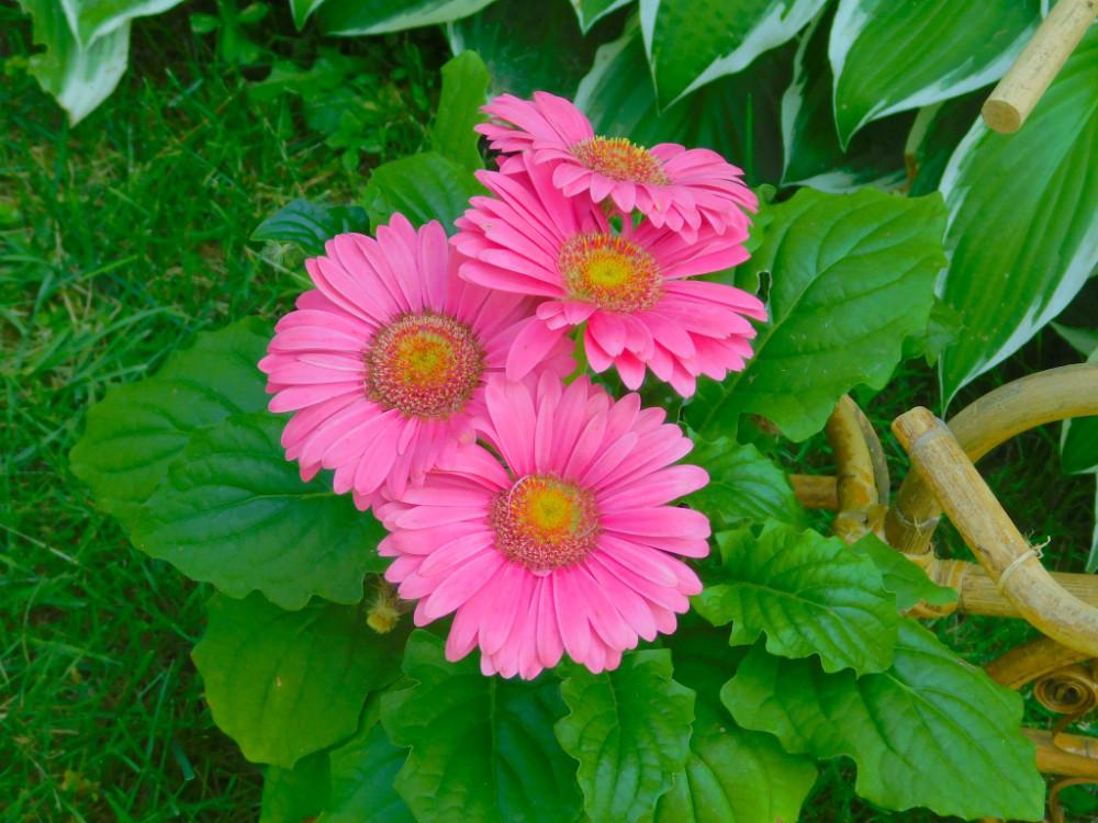 DSCN7187blog.jpg