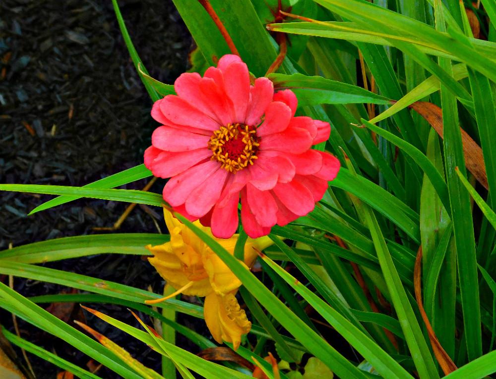 DSCN9594blog.jpg