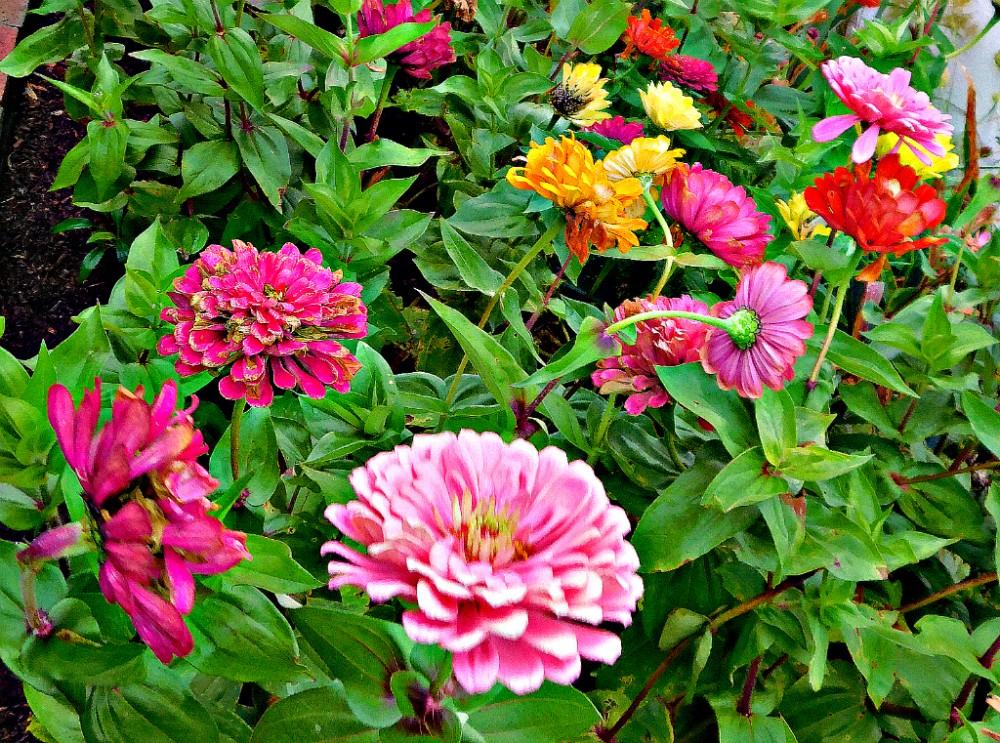 DSCN9637blog.jpg