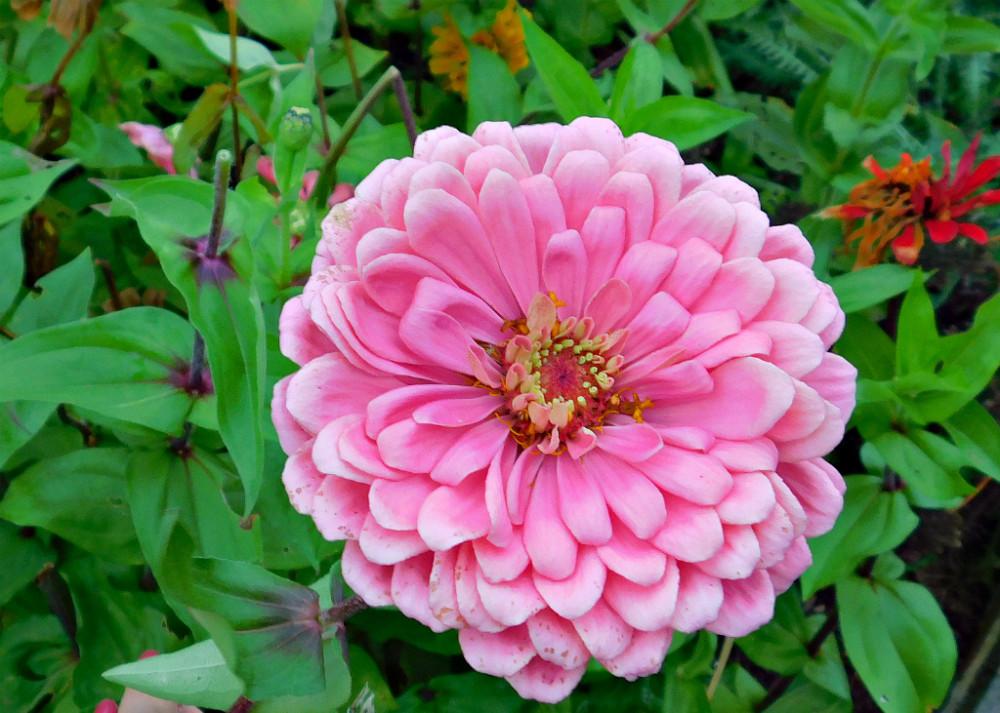 DSCN9638blog.jpg