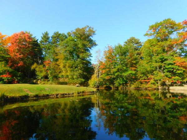 Осень, пруд, лебеди и крокодил