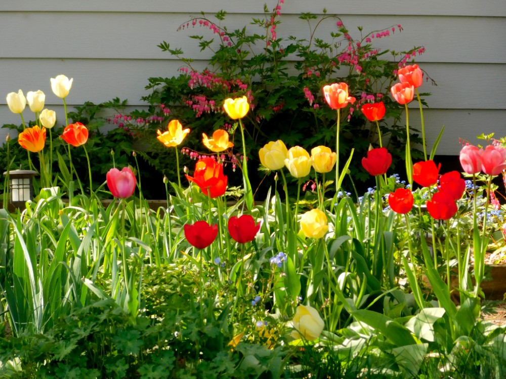 Май. Яркий, солнечный, цветущий... DSCN0758.jpg