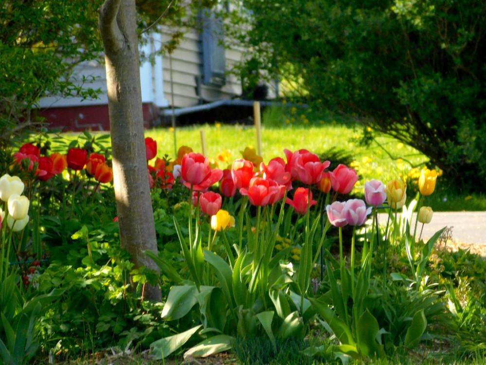 Май. Яркий, солнечный, цветущий... DSCN0765.jpg