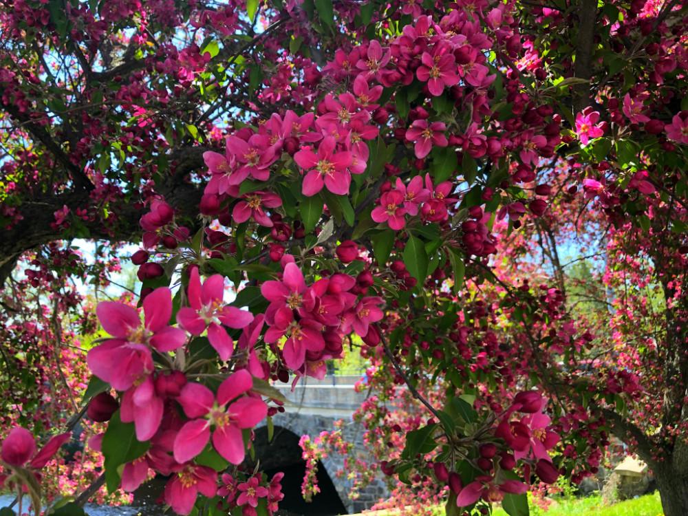 Май. Яркий, солнечный, цветущий... 220blog.jpg