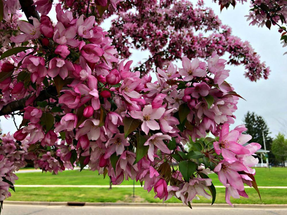 Май. Яркий, солнечный, цветущий... 186blog.jpg