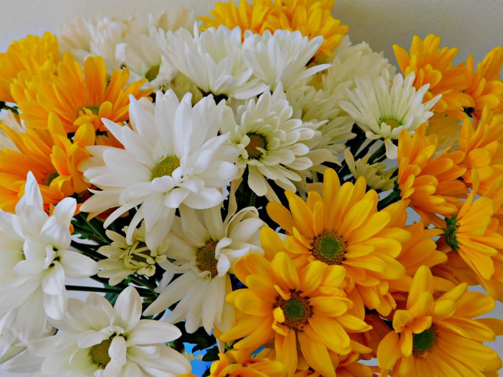 DSCN0113blog.jpg