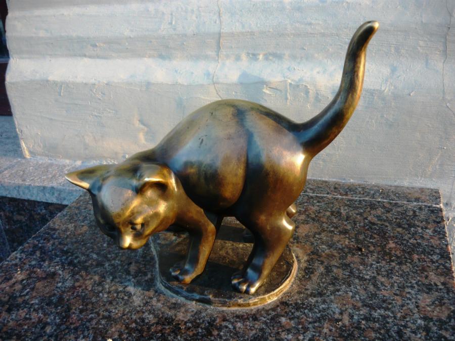 Картинки по запросу Республика кошек