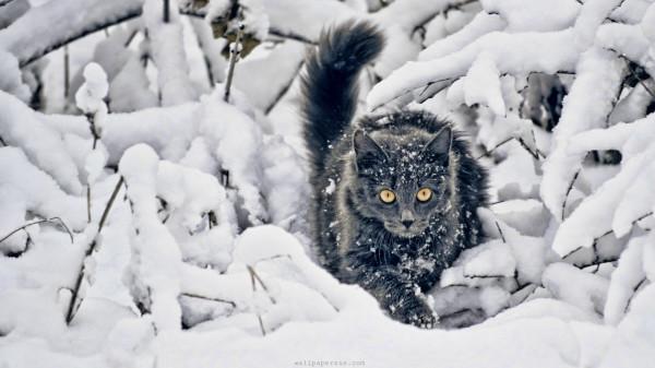 winter-snow-cats-animals-kittensг