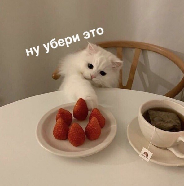 RgOVkgat4aM