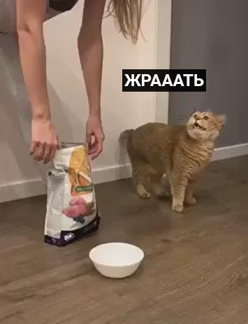 wYscQWjNrtM